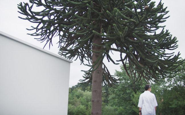 Raoul De Keyser Tree